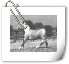 The horse running